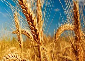 گامهای بلند «خودکفایی هدفمند» در تولید محصولات کشاورزی