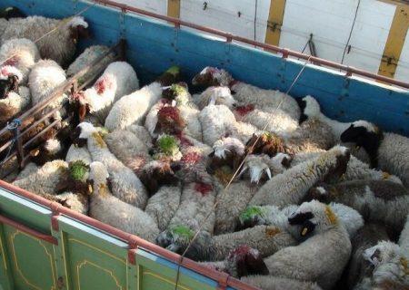 چند راهکار برای کاهش قیمت گوشت