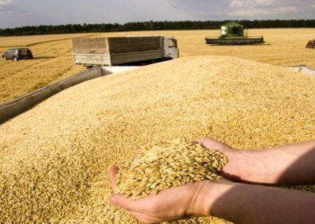 ۲٫۳ میلیون تن گندم خریداری شد/ خوزستان رکورددار خرید گندم در کشور